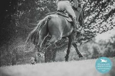 H And C Horse And Country ... .uk Equine Photography. Cross country. Galloping. Horses. Equestrian