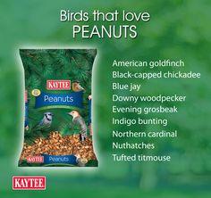 Shelled Peanuts for Wild Birds: Outdoor Bird Food Wild Bird Food, Wild Birds, Shelled Peanuts, Downy Woodpecker, Wild Bird Feeders, Black Capped Chickadee, Northern Cardinal, Goldfinch, Stuffed Shells
