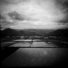 Japanese rice paddies