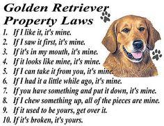 GOLDEN RETRIEVER FUNNY PROPERTY LAWS