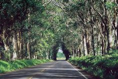 tunnel of trees - kauai - i have driven down this road and it was so much prettier than this