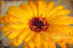 gelbe Blume mit Regentropfen orange Kunst Foto Wohnzimmer