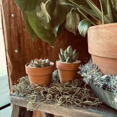 DESERT CEDAR Wood Wellness Tray Display Side Dish Succulents Rustic Distressed