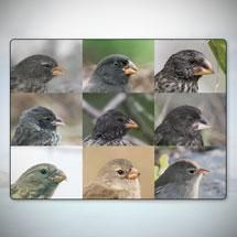 Sorting Finch Species | HHMI's BioInteractive  Great for natural selection