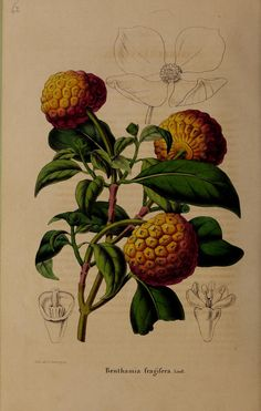 https://flic.kr/p/gJLEpk | n439_w1150 | La Belgique horticole :. Liége :[s.n.]. biodiversitylibrary.org/page/42946140
