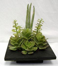 succulent arrangement...love the planter