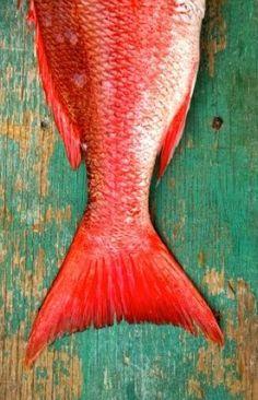 #fish ~ETS