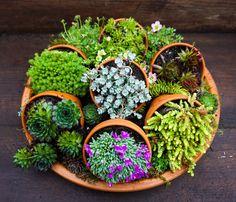Succulent creation