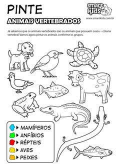 Animais Invertebrados Pinte