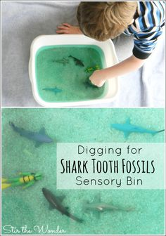 Digging for Shark Tooth Fossils is a fun, hands-on way for kids to learn about sharks and shark teeth!