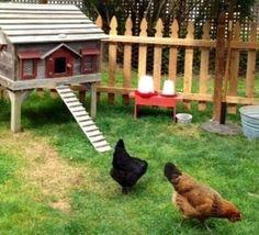 Avoir des poules dans son jardin, des conseils pour bien les accueillir..