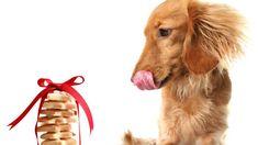 La golosità dei cani è nota: non c'è snack che a cui resistano. Ma se vogliamo stupirli per una festa speciale, ecco la ricetta dei biscotti alla pancetta