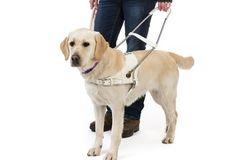 Onze honden - de blindengeleidehond