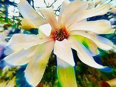 'coloured magnolia' von ursfoto bei artflakes.com als Poster oder Kunstdruck $16.63