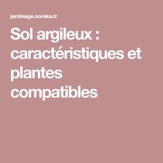 Sol argileux : caractéristiques et plantes compatibles