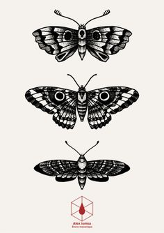 blackwork moth | dotwork butterfly | Tumblr