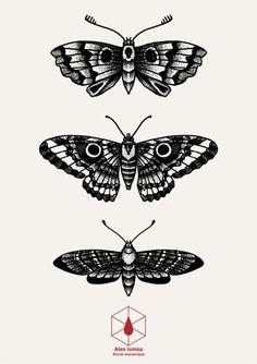 blackwork moth | dotwork butterfly | Tumblr