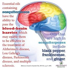 Essential oils containing sesquiterpenes have the ability to pass the blood-brain barrier, which may enable them to be effective in the treatment of Alzheimer's disease, Lou Gehrig's disease, Parkinson's disease, and multiple sclerosis. Oils that are high Essential Oils For Nausea, Ginger Essential Oil, Frankincense Essential Oil, Therapeutic Grade Essential Oils, Essential Oil Uses, Young Living Oils, Young Living Essential Oils, Healing Oils, Aromatherapy Oils