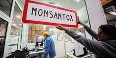 Monsanto: un juge révèle des documents explosifs - La Libre.be