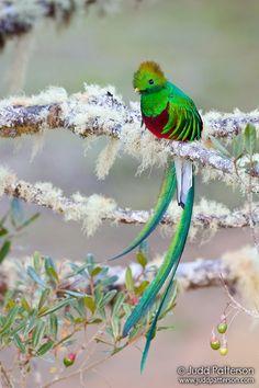 resplendent quetzal. fancy name for a fancy bird.