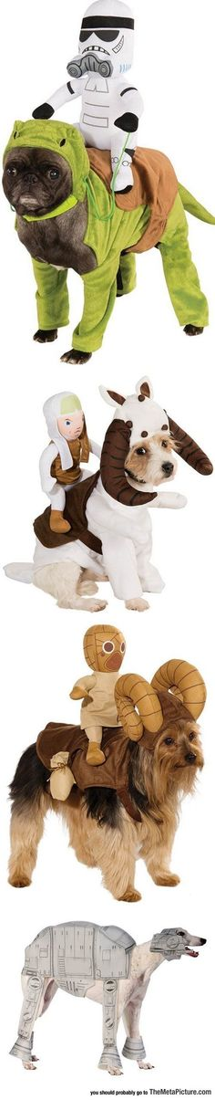 Funny pictures about Brilliant Star Wars Costumes For Dogs. Oh, and cool pics about Brilliant Star Wars Costumes For Dogs. Also, Brilliant Star Wars Costumes For Dogs photos. Star Wars Costumes, Pet Costumes, Funny Costumes, Zombie Costumes, Awesome Costumes, Family Costumes, Group Costumes, Halloween Costumes, Walt Disney Pictures