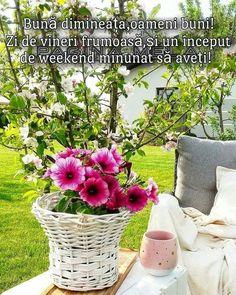 Rustic Gardens, No Time For Me, Good Morning, Glass Vase, Plants, Instagram, Gardening, Flowers, Wine