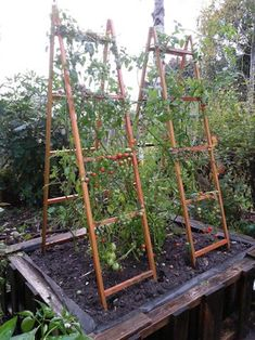 Backyard Vegetable Gardens, Veg Garden, Vegetable Garden Design, Garden Trellis, Tomato Trellis, Plant Trellis, Garden Beds, Cucumber Trellis, Diy Trellis