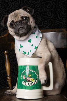 The Luck Of The Irish via25 Ridiculously Cute St. Patrick's Day Pets