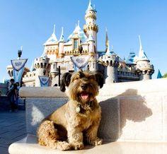 The cute #adventures of Oscar, #dog who travelled the world http://www.kafepauza.mk/zanimlivosti/slatkite-avanturi-na-oskar-kucheto-koe-go-prosheta-cel-svet/