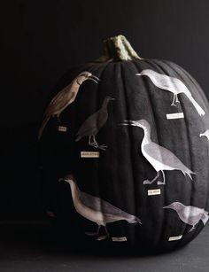 Black Bird Pumpkin
