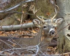Great Deer Hunting Tips For Tree Stand/Ground Blind Placement, Spotting Deer and Taking The Critical Shot It's that time of year when ou. Quail Hunting, Deer Hunting Tips, Deer Hunting Blinds, Hunting Rifles, Turkey Hunting, Hunting Stuff, Moose Hunting, Crossbow Hunting, Archery Hunting