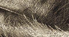 Toto pierko tvorí tisíce nahých ľudských tiel – Doba Mag.