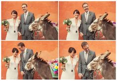 nice wedding donkey