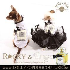 Chihuahua Angel in een stijlvolle hondenjurk. deze hondenkledij is online verkrijgbaar