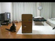 大きな箱とねこ。 - YouTube