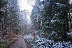 Winterwald Nähe Großer Ehberg