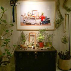 """ The Landscapers Store Hut EXPOCITY "" 19th November 2015 Grand Open.  @the_landscapers_japan #the_landscapers_japan #tillandsia #airplants #interior #botanical #green #lifestyle #xerographica #driftwood #happy #color #チランジア #エアプランツ #流木 #鎌倉 #鎌倉山 #ボタニカル #インテリア #cute #fun #beautiful #smile #hanging #greenlife  #life #atelier #hut #expocity #osaka"
