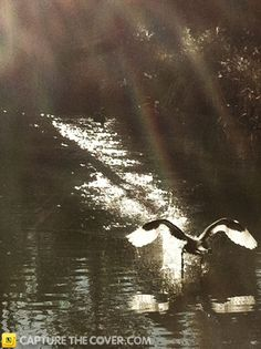 Blair Athol Creek #CaptureTheCover entry - by Raul in Sydney's Liverpool Region. Click to enter your photos!