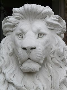 lion-6874_640.jpg (480×640)