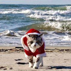 メリークリスマス。 ニャン吉サンタが海から参上! 聖誕快樂! 聖誕喵吉從海上來囉! สุขสันต์วันคริสต์มาส Merry Christmas.