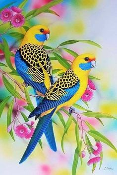"""Yellow Rosellas"" by Lyn Cooke. Paintings for Sale. Bluethumb – Online Art Galle… ""Yellow Rosellas"" by Lyn Cooke. Paintings for Sale. Cute Birds, Pretty Birds, Funny Birds, Most Beautiful Birds, Animals Beautiful, Exotic Birds, Colorful Birds, Vogel Illustration, Beautiful Nature Wallpaper"
