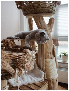 Spezialanfertigungen, dein Kratzbaum, auch für große Katzen - Naturholzbäume für Katzen Cattery, Cat Furniture, Crazy Cats, Beautiful Creatures, Habitats, Cats And Kittens, Wicker, Kitty, Blanket
