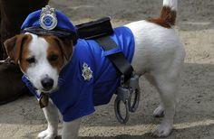BONDE DA BARDOT: Rio pode ganhar Delegacia Especial de Proteção aos Animais