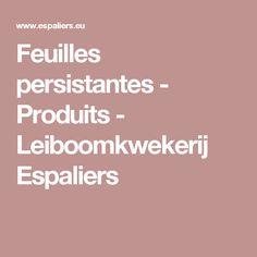 Feuilles persistantes - Produits - Leiboomkwekerij Espaliers