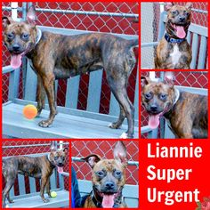 liannie+su+3+6+16.jpg (506×506) RETURNED REAL Hero w 4evr home required