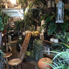 【herrei_makoto】さんのInstagramをピンしています。 《15日の土曜日はお店お休みです。 we are closing on next Saturday thanks.  #plants #interior #装飾 #グリーン #テラリウム #nihonbashi ##flowers #植物》