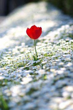 Προσκυνητής: Ποτέ μη πληγώσεις άνθρωπο για κάτι που συμβαίνει στη ζωή του #beautifulflowerslove