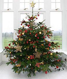 Pre Decorated Real Christmas Tree Christmas Tree Real Christmas Tree Gold Christmas Decorations