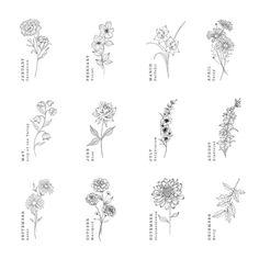 Aster Tattoo, Daffodil Tattoo, August Flower Tattoo, Carnation Flower Tattoo, September Birth Flower, Birth Month Flowers, Gladiolus Tattoo, Delphinium Tattoo, Flower Bouquet Tattoo