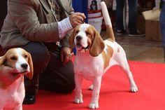 Pasarela Promocional del 4º Salón del Animal de Compañía, Mi Mascota | 10 de octubre en la Plaza de la Constitución de Málaga | www.feriamimascota.com